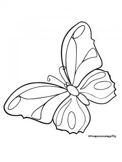 Coloriage papillon citron cat gorie insectes - Coloriage citron ...